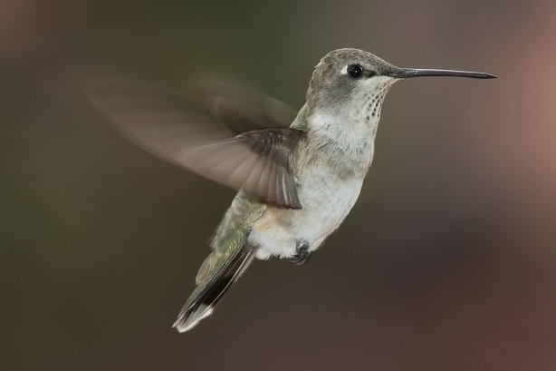 What the Google Hummingbird Update Really Means